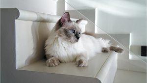 Kinh nghiệm chọn mua mèo cảnh