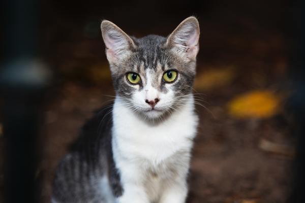 Trại mèo SherylDolls