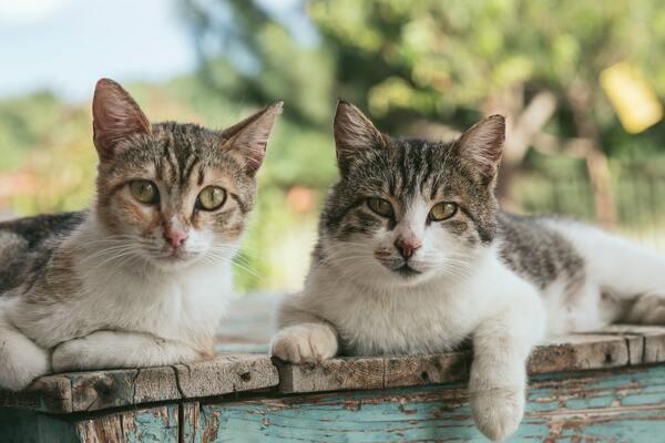 Địa chỉ dành cho những ai đang có nhu cầu mua mèo cảnh