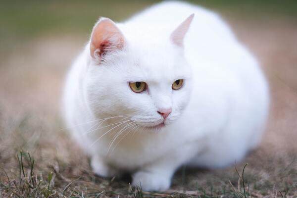 Lưu ý khi chọn mua mèo cảnh
