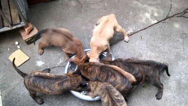 Thức ăn cho chó Phú Quốc