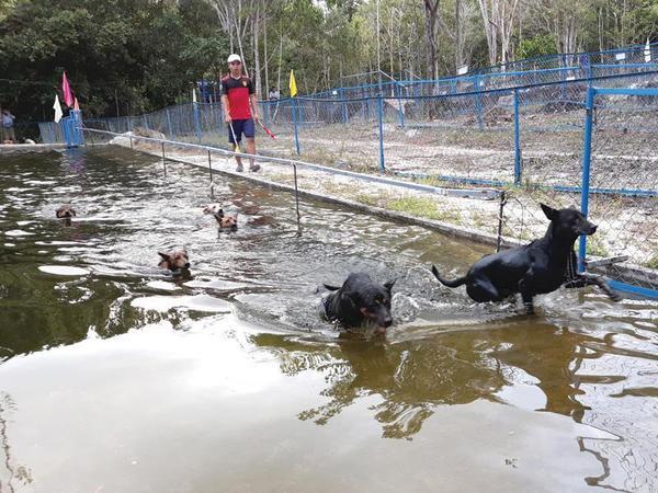Dạy chó Phú Quốc bơi