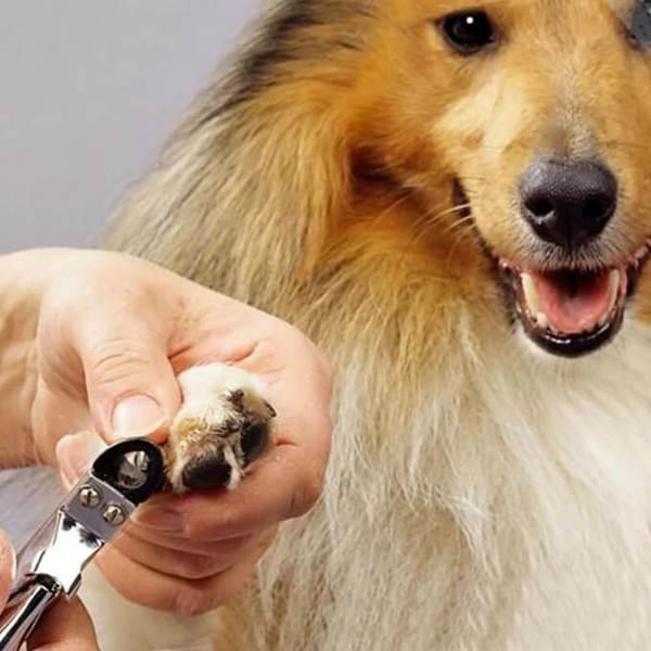 cắt móng cho chó