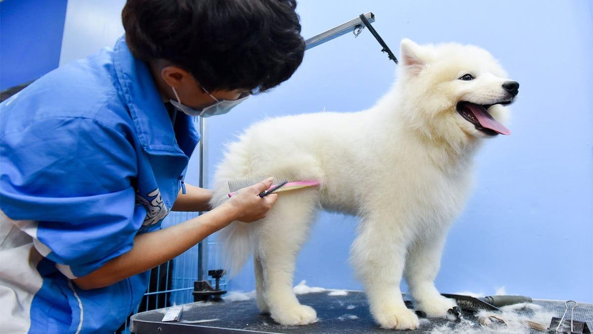 Cách tỉa lông cho thú cưng đúng cách