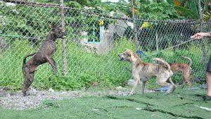 trại chó Phú Quốc
