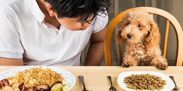 thức ăn cho chó ANF