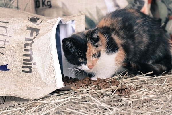 ưu điểm của Fitmin Purity Kitten