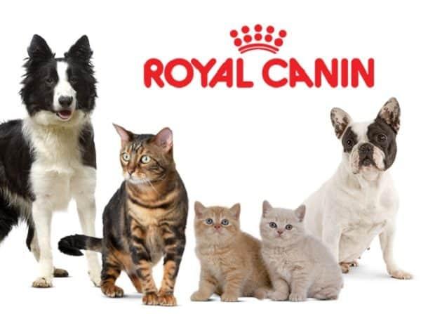 giới thiệu về Royal Canin