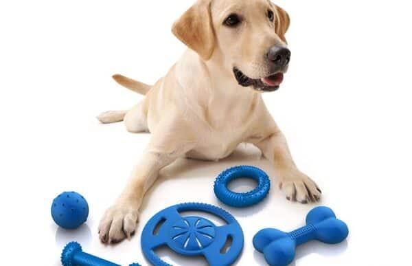 đồ chơi cho chó