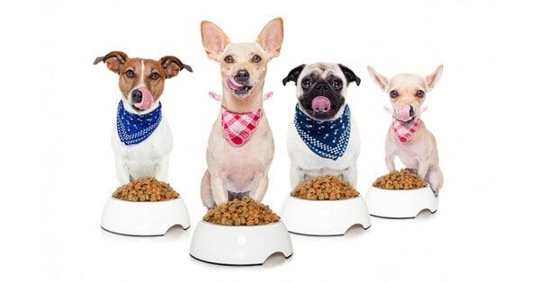 các thương hiệu thức ăn khô cho chó