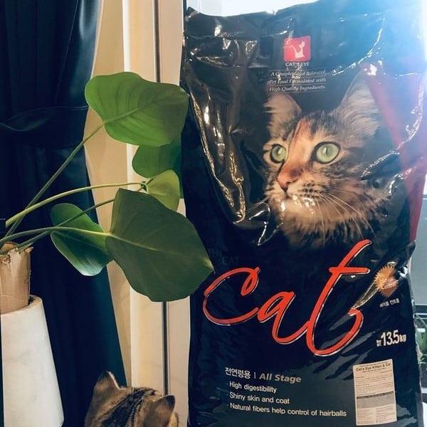 nguồn gốc của thức ăn cho mèo Cat's eye