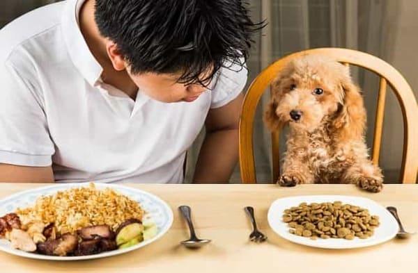 Bạn cần cân nhắc lựa chọn thức ăn phù hợp cho chó Poodle theo từng lứa tuổi