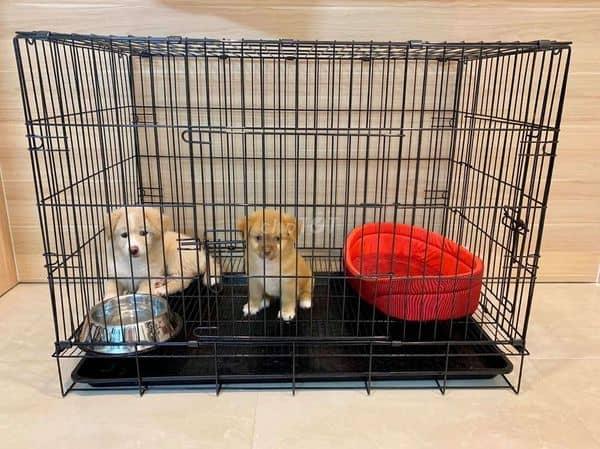 Không gian riêng cho chó