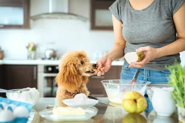 Chó Poodle từ 3 - 6 tháng tuổi có thể bổ sung thêm các thức ăn dinh dưỡng