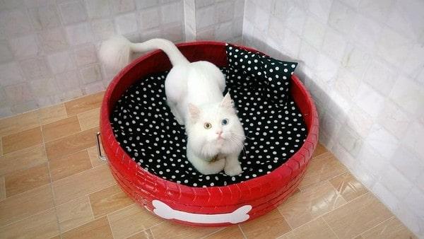 Nếu mèo đẻ vào mùa đông, bạn nên chú ý giữ ấm cho ổ và không gian xung quanh sạch sẽ, yên tĩnh