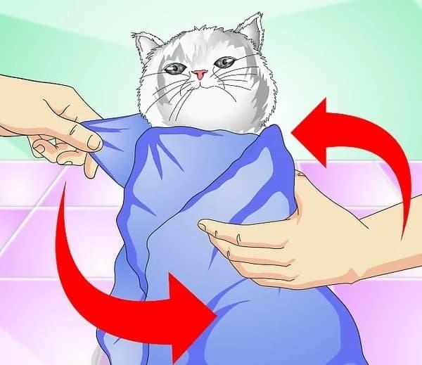 Khi cho mèo mang thai dùng thuốc, bạn nên dùng khăn bọc kín cơ thể, chỉ chừa lại phần đầu
