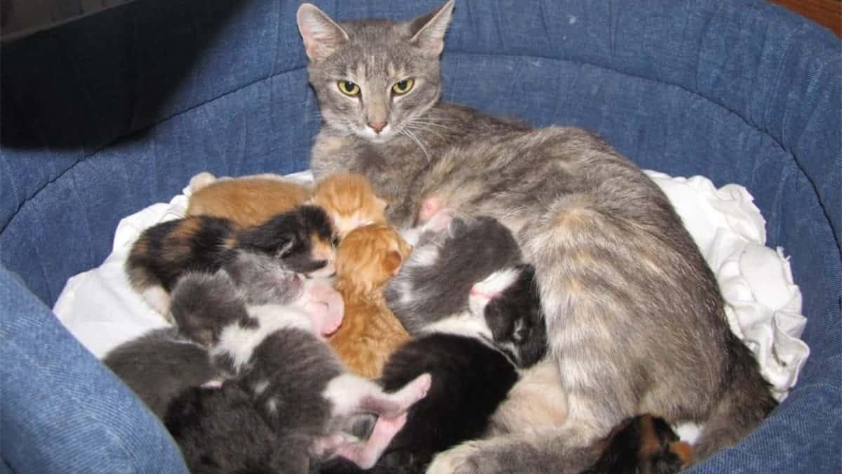 cách chăm sóc mèo mang thai