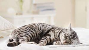 Thuốc cho mèo mang thai