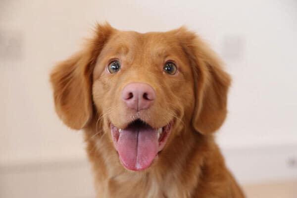 Thuốc trị bệnh dị ứng ở chó
