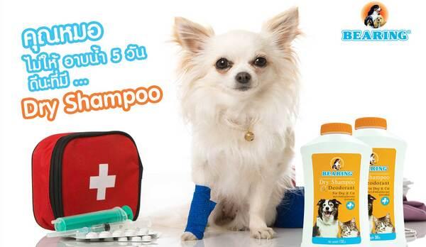 Bearing Petcare - chuyên cung cấp sản phẩm chăm sóc thú cưng