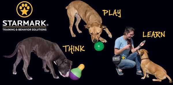 Starmark Academy - Thương hiệu đồ chơi và huấn luyện chó nổi tiếng của Mỹ