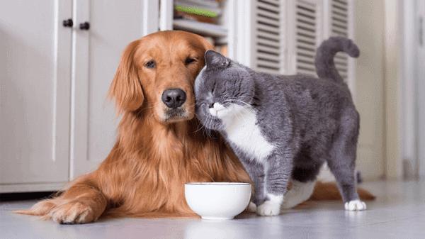 """Phương châm hoạt động của Bayer: """"Sức khỏe thú cưng – Niềm Vui của bạn – Hạnh phúc của chúng tôi"""""""
